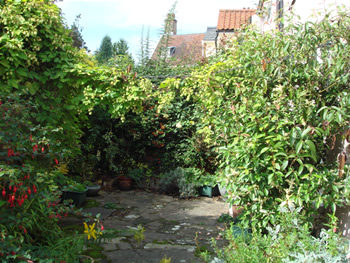 Old overgrown garden