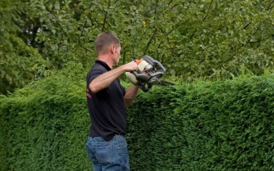 Gardener cutting hedges